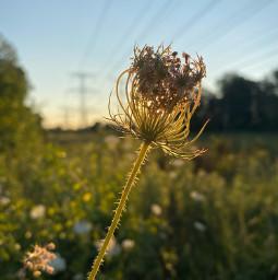 lovely myphoto nature flower loveit sunset life picsart night sky music freetoedit
