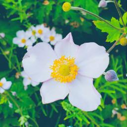 vintage flowers nature picoftheday photography myclick📷 myclick