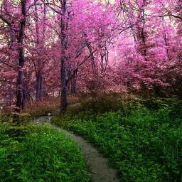 freetoedit picssrt vipshoutout nature naturesbeauty naturephotography colorful changecolor dailytag dailyinspiration challenge gallery remix remixit remixed