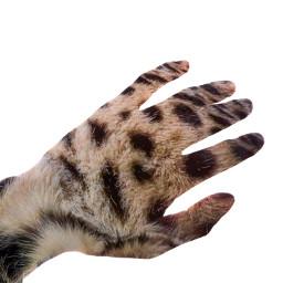 freetoedit hand leopard leopardprint cat fur animal