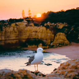 cliffwalk sunsettime thesungoesdown goldenhour summertime warmweather goldenlight seagull cliffs beachview peacefulplace quitemoments naturephotography freetoedit