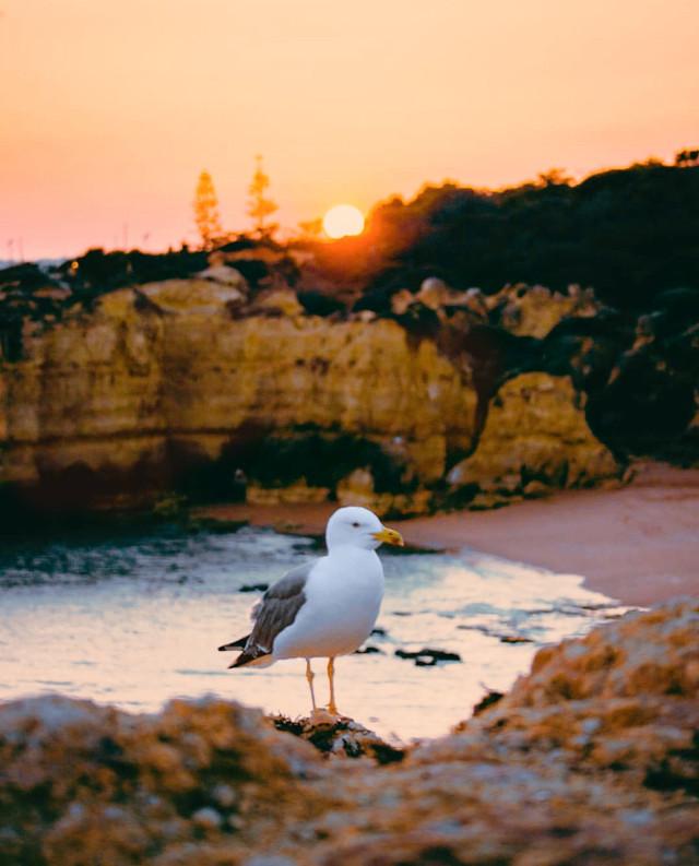 #cliffwalk #sunsettime #thesungoesdown #goldenhour #summertime #warmweather #goldenlight #seagull #cliffs #beachview #peacefulplace #quitemoments #naturephotography   #freetoedit