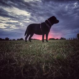 myphotography dog