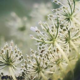 nature plantsandflowers flowers wildflower simple freetoedit
