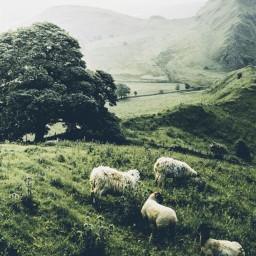 freetoedit mountain animals sheep country countyside mounains mountainside ireland irish background aethstic vibes vibe