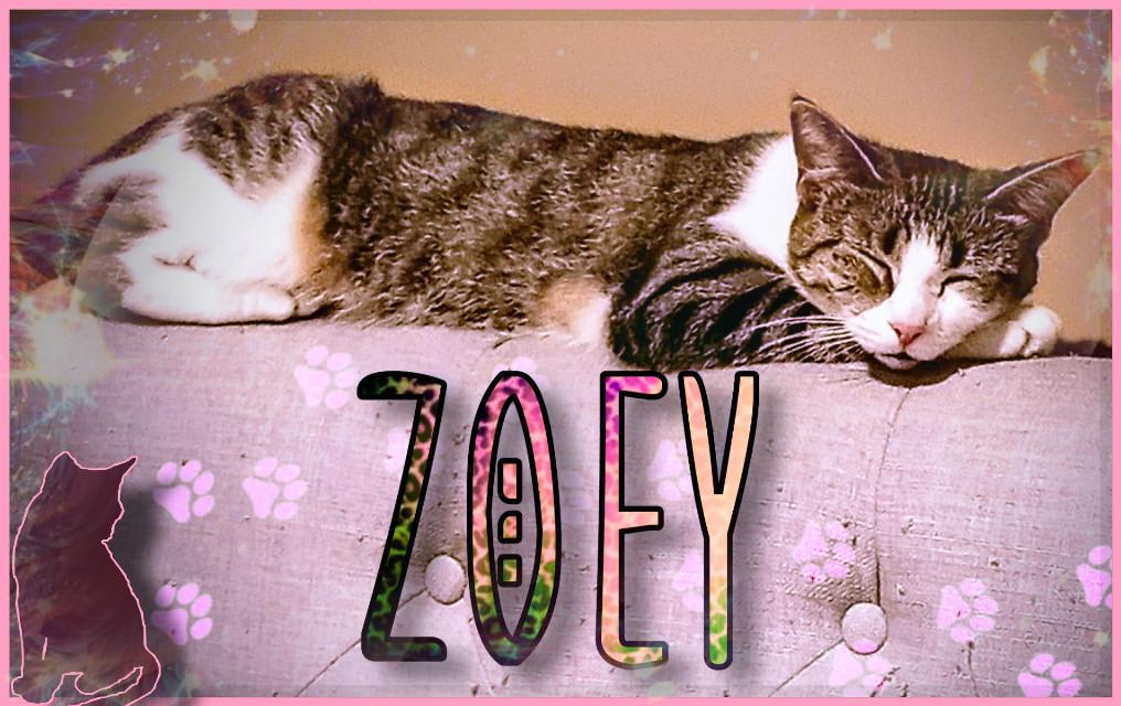 #freetoedit  #freetoedit #zoey #kitty #mylove #mybabygirl #zoebear #zoemonster #runtskie #runt #girlcat #dababy #pets #animals #furrbaby