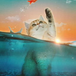 madewithpicsart madebyme myedit cat redfish magical sun sea sunshine colorful clouds ecintothewater intothewater