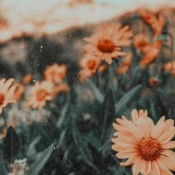 freetoedit background backround wallper flower