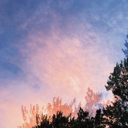 freetoedit photography overlay trees sky sunset pinkclouds simple nature madewithpicsart picsart