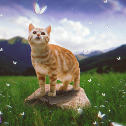 freetoedit cat butterflies grass rock landscape ftestickers picsarteffects madewithpicsart