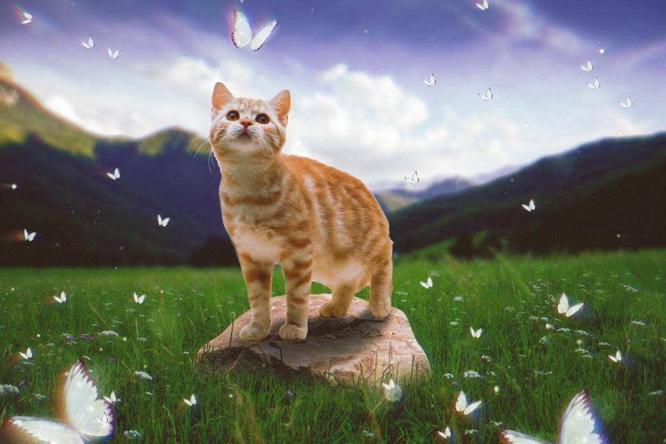 #freetoedit #cat #butterflies #grass #rock #landscape #ftestickers #picsarteffects #madewithpicsart