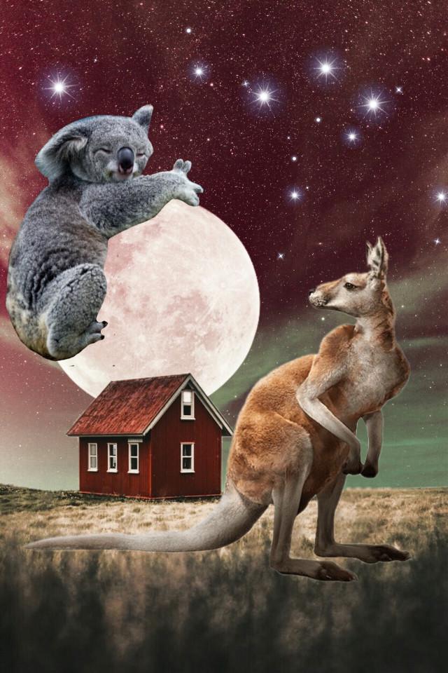#freetoedit#remix#koalabear#kangaroo#moon#house#night#fantasy#surreal#photomanipulation