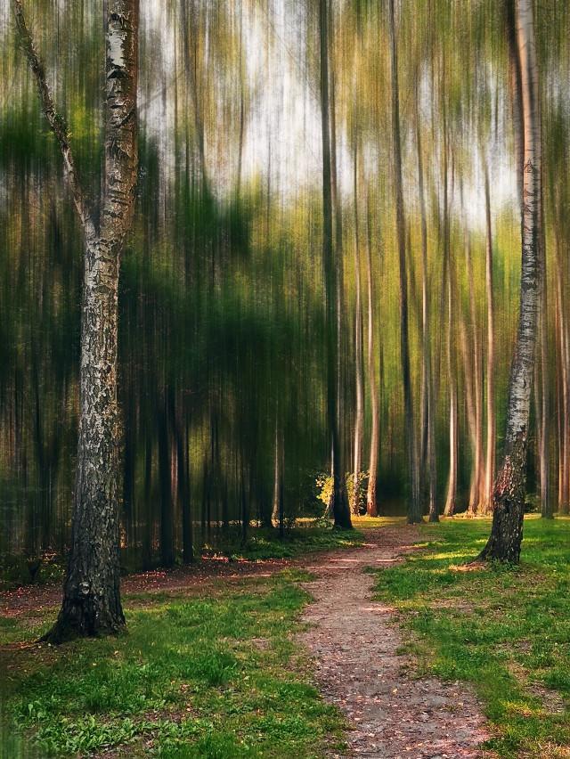 #freetoedit #nature #photography #forest #woodland #trees #tree #birchtree #road #forestroad #myphoto #myedit #myart #blureffect #artistic #madewithpicsart @picsart #JoannArt #becreative #HeyPicsArt