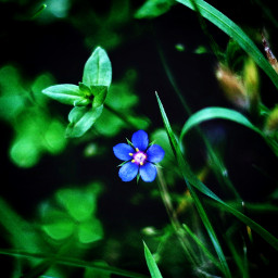 myphotography nature flowers flower plants photography background dark moody freetoedit
