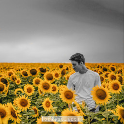 sunflower sunflowers colorsplash colorsplasheffect blackandwhite orient_arts madewithpicsart freetoedit ftestickers stayinspired createfromhome remixit