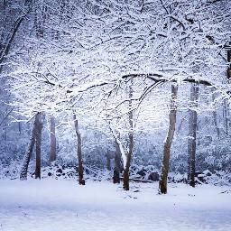 freetoedit snow landscape trees