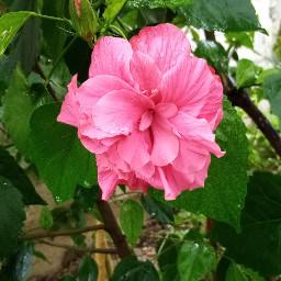 ohotography flower lluvia naturaleza tiempos