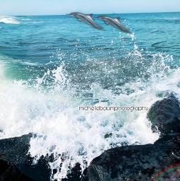 dolphin dolphininocean freetoedit