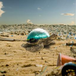 freetoedit surrealart surrealism fantasy turtle trash climatechange ocean fish massage future manipulation