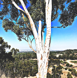 cliffview treelove westcoast hikelife caligirl hikingadventures lookdown seeme mood mymind myeye bchez photography edit