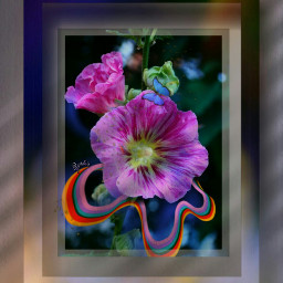 freetoedit mural flower roses rccolorfulshapes colorfulshapes