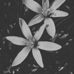 flowers blackandwhite picoftheday nature landscape myclick📷 myclick