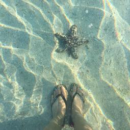 starfish magical sea ocean breeze holiday interesting photography nature