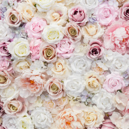 freetoedit flowerphotography flowerwall flowerwallpaper floralbackground