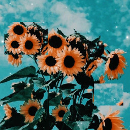 flower aestheticallypleasing aesthetic aestheticpic sunflower yellowflower yellow green sparkle glitter shimmer glow sky aestheticsky freetoedit
