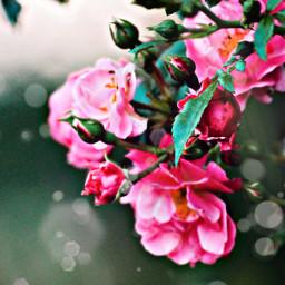 flower pink pretty iloveit amazing freetoedit