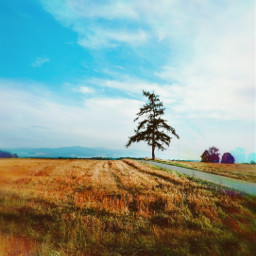 freetoedit tree road alonetree farmland sky bluesky clouds landscape nature beautifulnature