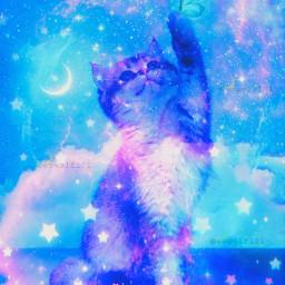 kitty cat cutecat cute galaxy galaxyaesthetic galaxyaesthetics galaxycat galaxyedit aesthetic aestheticedit aesthetics butterfly butterflie bluebutterfly moon stars bluegalaxy surreal surrealism freetoedit
