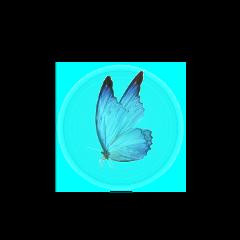 freetoedit butterfly blue bluebutterfly blueaesthetic aesthetic aesthetics bluelight light