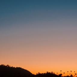 freetoedit remixit sunset outside nature palmtrees photography surreal edit myedit