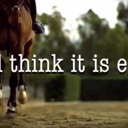 freetoedit horseridingisasport horsepower equestrian