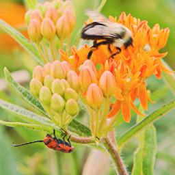 freetoedit summervibes flower insects closeupshot