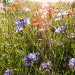 freetoedit meadow summer myphoto nature