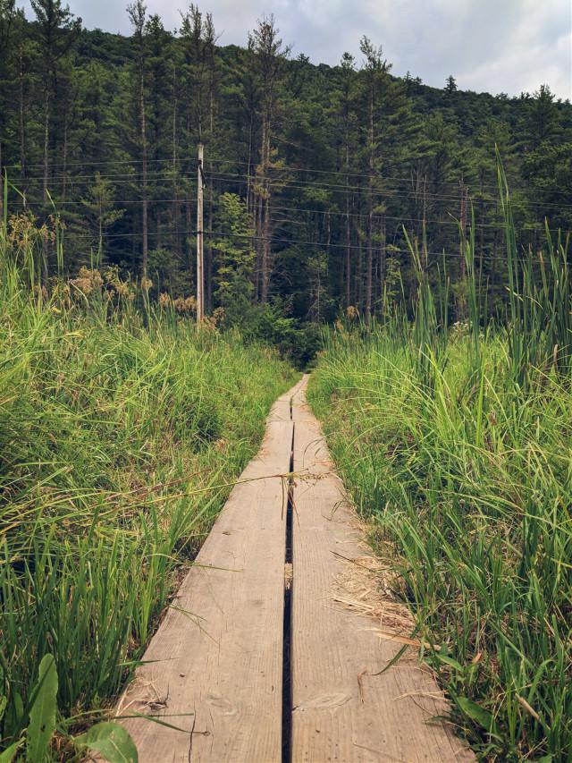 #travel #path #saturday #photography #jacobyfalls #path