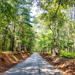 freetoedit summervibes natute naturelover outdoors summer forest woods travel road country green summertime happy happiness