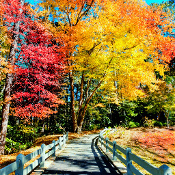 freetoedit picsart vipshoutout wppnature nature naturephotography colors changecolor trees dailytag dailychallenge challenge gallery gallerywall forest forestpark remix remixit remixed