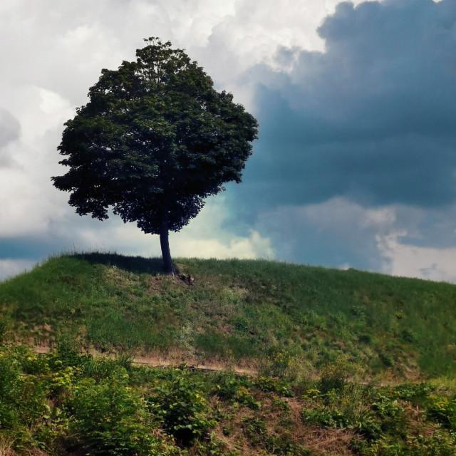 #freetoedit #tree #alonetree #mountain #sky #clouds #nature #photography #beautifulnature #beautifulday #summer #summertime #holliday #vacation #myphoto #myclick #madewithpicsart @picsart #JoannArt #becreative #picsartmaster