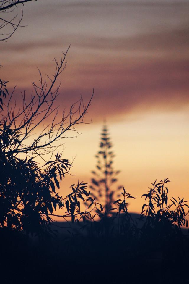 #endoftheday #goldenhour #sunsettime #silhouettes #bushes and #treessilhoutte #sunsetsilhouettes #depthoffield #skyandclouds #sunsetcolors #earthytones #peacefulandandquietmoments #contemplationmoments #summersunset #warmweather #naturephotography                                                                               #freetoedit