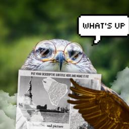 freetoedit owl whatsup grandpa newspaper