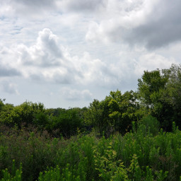 nature landscape grasses bushes trees clouds freetoedit pcmybestphoto mybestphoto