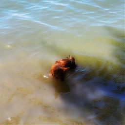 reflection interesting dog lake summervibes vacationmood petsandanimals dogsofpicsart water selfie