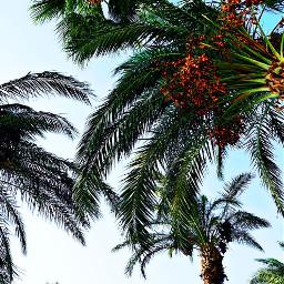 عام_هجري_جديد١٤٤٢ه كل_عام_وانتم_بخير كل_عام_وانتم_إلى_الله_أقرب عام_هجري_جديد عام_هجري_سعيد تصويري📷 كتابتي happy_new_year happy happiness happyday nature landscape egypt tree palmtrees photography myphotography mywriting freetoedit تصويري pcmybestphoto mybestphoto