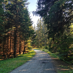 freetoedit nature forest woodland beautifulday trees forestroad landscape road