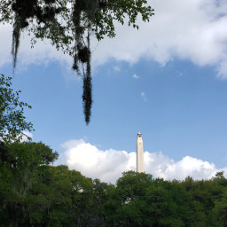 freetoedit nature photography landscape spanishmoss pcmybestphoto