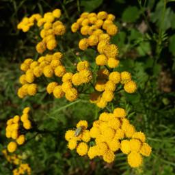yellowflower sunny_day summer