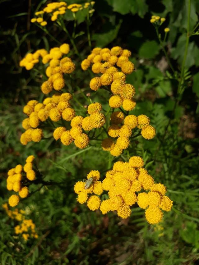 #yellowflower #sunny_day #summer